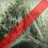 Avoid mold and moisture