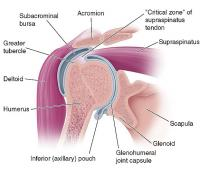 Coronal section of shoulder