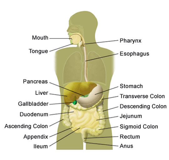 10 symptoms of appendicitis on appendicitis location diagram