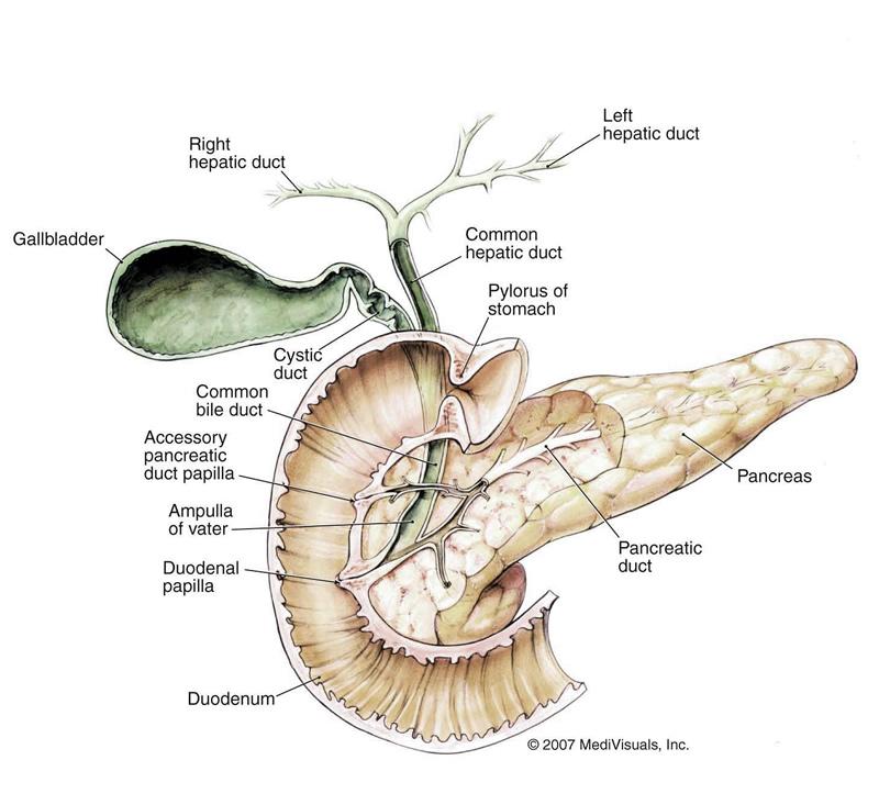 Pancreatitis - Causes and Symptoms