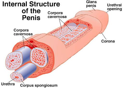 How To Grow Penice