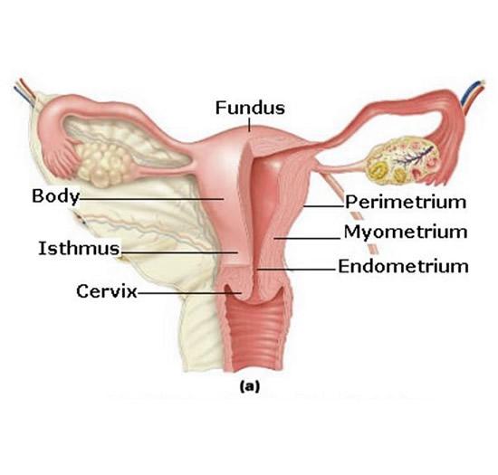 Adenomyosis Uterine - Symptoms and Treatment