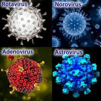 Viral gastroenteritis causes